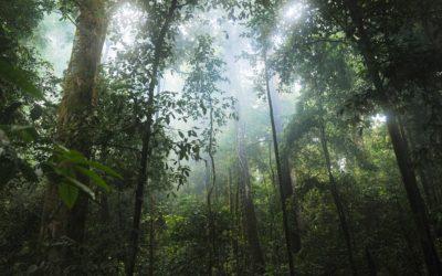 Zaterdag 11 mei – red het regenwoud